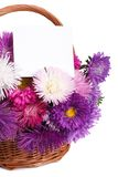 Wicker basket with colorful asters and a card Stock Image