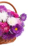 Wicker basket with colorful flowers asters Stock Image