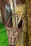 Wicker Basket And Corn Stock Image
