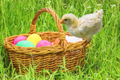 Wicker basket with Easter eggs and chicken Stock Photo