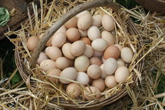 Wicker basket with eggs Royalty Free Stock Images