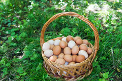Wicker basket with eggs is standing on grass stock images