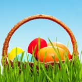 Wicker basket with eggs. Wicker basket with easter eggs in green grass Royalty Free Stock Images