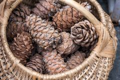 Wicker basket filled with cedar cones Royalty Free Stock Images