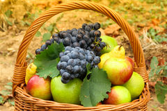 Wicker basket filled with fruits Royalty Free Stock Image