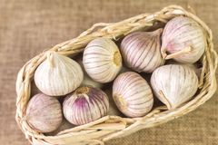 Wicker basket filled with garlic on a linen tablecloth, the view. Wicker basket filled with garlic Allium sativum on a linen tablecloth, the view from the top stock photography