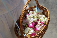 Wicker basket with flower petals in the hands of a girl. Wicker basket with fresh flower petals in the hands of a girl Stock Photos
