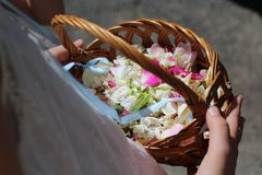 Wicker basket with flower petals in the hands of a girl. Wicker basket with fresh flower petals in the hands of a girl Stock Image