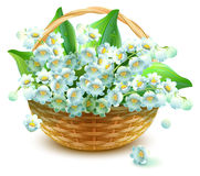 Wicker Basket of flowers. Flower lily valley. Bouquet lily of valley Stock Photography