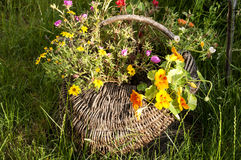 Wicker basket with flowers Royalty Free Stock Photography