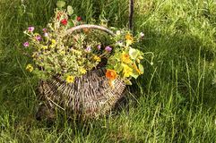 Wicker basket with flowers Stock Photos