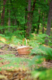 Wicker basket in a forest Stock Images