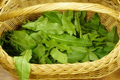 Wicker basket with forest sorrel Royalty Free Stock Images