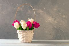 Wicker basket of fresh blooming tulips stands on wooden table. Banner mockup with copyspace for Womans or Mother day, Easter, spri. Ng holidays, birthday stock photography