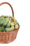 Wicker basket of fresh cucumbers isolated on white Stock Image