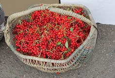 Vintage wicker basket with fresh harvested red berries Royalty Free Stock Photos