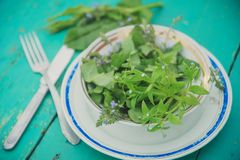 Wicker basket with fresh herbs. Healthy food. Detox. Organic nutrition. Salad with sorrel and mint with flowers Stock Images