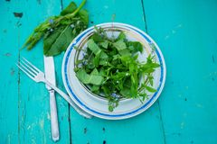 Wicker basket with fresh herbs. Healthy food. Detox. Organic nutrition. Salad with sorrel and mint with flowers Royalty Free Stock Images