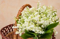 Wicker basket of fresh lily of the valley close up. The Wicker basket of fresh lily of the valley close up Royalty Free Stock Image