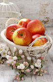 Wicker basket of fresh red ripe apples. Royalty Free Stock Images