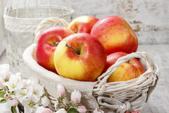 Wicker basket of fresh red ripe apples. Royalty Free Stock Photos