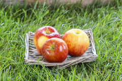 Wicker basket of fresh red ripe apples stock photography