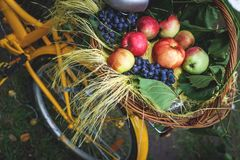 Wicker basket with fruit on a yellow hipster bike, autumn picnic in nature with a healthy diet Stock Images