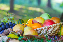 Wicker basket full of autumn fruit Royalty Free Stock Photography