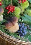 Wicker basket full of autumn plants Stock Photography