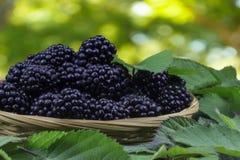 Wicker basket full of blackberries Royalty Free Stock Images