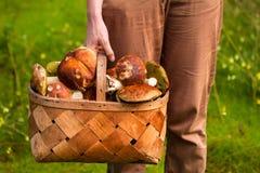 Wicker basket full of boletus mushrooms Stock Image