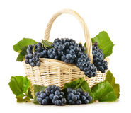 Wicker basket full of fresh red grapes on white Royalty Free Stock Images