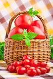 Wicker basket full of fresh tomatoes Royalty Free Stock Images