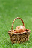 Wicker basket full of gala apples Royalty Free Stock Photography