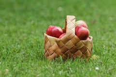 Wicker basket full of gala apples Royalty Free Stock Photos