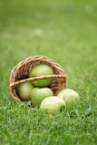 Wicker basket full of green apples Royalty Free Stock Images