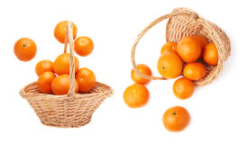 Wicker basket full of multiple ripe fresh juicy tangerines, composition isolated over the white background Stock Photos