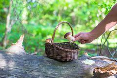 Wicker basket full of mushrooms in a forest Stock Images