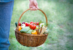 Wicker basket full of organic vegetables. In hand of farmer, basket full of organic vegetables Stock Photos