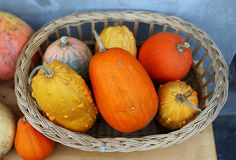 Wicker basket full of pumpkin Stock Image