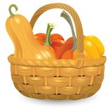 Wicker basket full pumpkins isolated on white background. Autumn harvest collection illustration. Vector Illustration