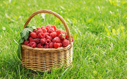 Wicker basket full of raspberry Royalty Free Stock Photos
