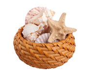 Wicker basket full of sea shells Royalty Free Stock Images