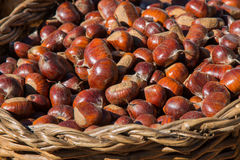 Wicker Basket full of sweet organic Chestnut at country market Royalty Free Stock Image