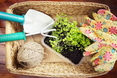 Wicker basket with garden tools and seedlings Stock Photos