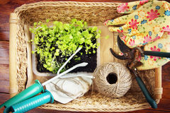 Wicker basket with garden tools and seedlings Royalty Free Stock Photos