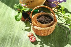 Wicker basket with gardening tools and flowerpot on wooden table stock photography