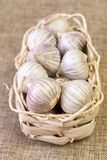 Wicker basket with garlic on linen fabric. Wicker basket with garlic Allium sativum on linen fabric royalty free stock photo