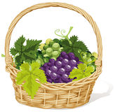 Wicker basket of grapes Royalty Free Stock Photography