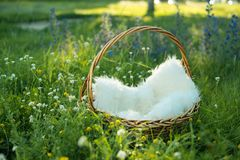 Wicker basket in the grass with white bedding. Wicker basket in the grass with a white wool bedding Royalty Free Stock Images